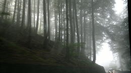 The morning started off foggy, but it was very atmospheric driving through the misty forests! , Sara from NZ - October 2011