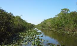 Photo of Miami Miami Super Saver: Everglades Airboat Adventure and Miami City Tour My favorite Everglades shot.