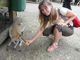 Feeding a wallaby , Nadezhda N - January 2011