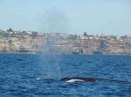 Photo of Sydney Sydney Eco Whale Watching Small Group Cruise Sydney Whale Watching