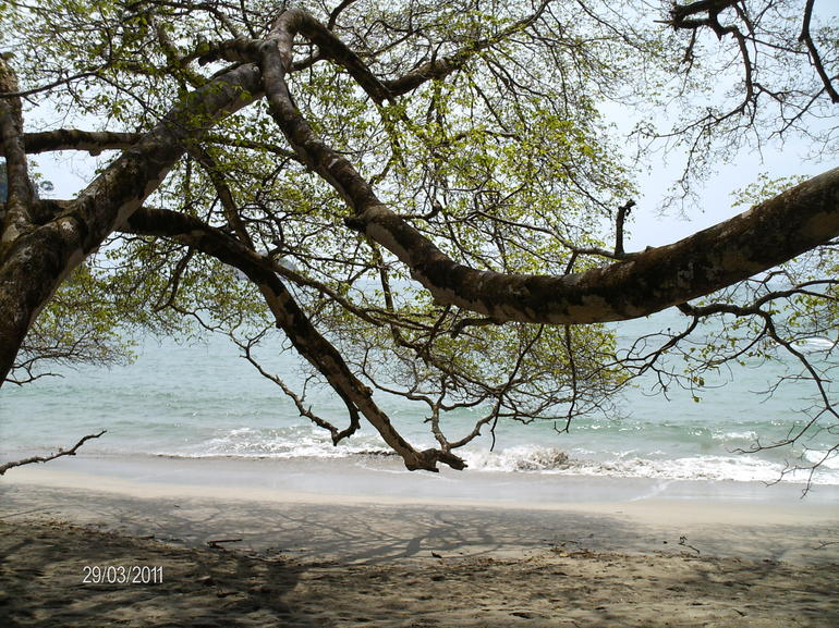 The perfect encounter between jungle and beach - San Jose