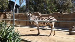 So much to see, I didn't count how many stripes it had!, Dani - March 2015