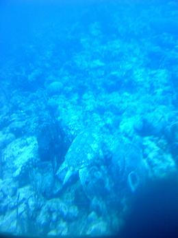 Couldn't use flashes...look closely...you'll see the turtle , Savita R - June 2012