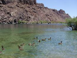 Photo of Las Vegas Black Canyon River Rafting Tour Black Canyon & Ducks