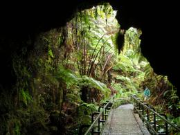 This photo was taken looking out from Thurston Lava tube., Thomas Z - January 2009