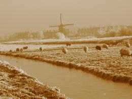 Photo of Amsterdam Zaanse Schans Windmills, Marken and Volendam Half-Day Trip from Amsterdam Windmills in the frost