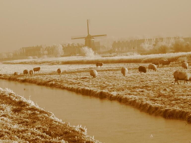 Windmills in the frost - Amsterdam