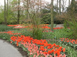 Photo of Amsterdam Keukenhof Gardens and Tulip Fields Tour from Amsterdam amsterdam 007