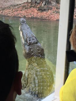 Taken from the boat ride! Watching them feed the crocodiles was so cool! , Stephanie D - September 2015