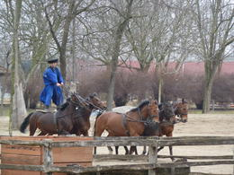 Photo of Budapest Puszta Great Plains and Kecskemet Day Trip from Budapest Horse riding