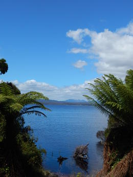 Photo of Tasmania Gordon River Cruise from Strahan Island Scene