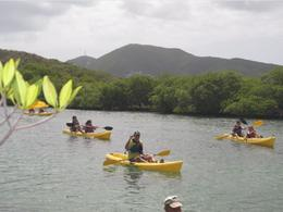 Photo of St Thomas St Thomas Mangrove Lagoon Kayak and Snorkel Tour Kaykaing through the Lagoon