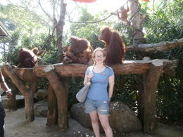 Photo of Singapore Singapore Zoo Morning Tour with optional Jungle Breakfast amongst Orangutans Orangutans