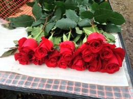 The greenhouse tour was fun and makes you appreciate the work necessary to produce beautiful roses , Nancy B - March 2014