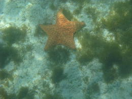 Starfish at the last stop , Vanessa R - March 2012