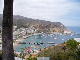 Photo of Anaheim & Buena Park Catalina Island Day Trip View of the Avalon Harbour