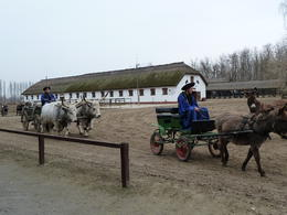 Photo of Budapest Puszta Great Plains and Kecskemet Day Trip from Budapest Donkeys and cows