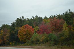 Near a forest in NH , Soumitra S - October 2013