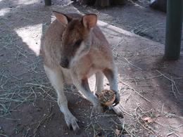 Photo of Sydney Blue Mountains Nature and Wildlife Day Tour from Sydney Featherdale Wildlife Park