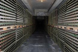 Bottles of Cava waiting to reach maturity, Elizabeth D - February 2009