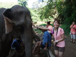 Photo of Chiang Mai & Chiang Rai Chiang Dao Elephant Jungle Trek and Ping River Rafting Tour from Chiang Mai Visiting with the elephants