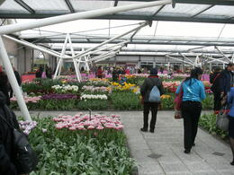 Photo of Amsterdam Keukenhof Gardens and Tulip Fields Tour from Amsterdam amsterdam 027