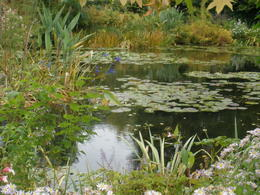 Photo of Paris Versailles and Giverny Day Trip Lily Pads