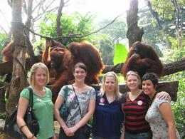 Photo of Singapore Singapore Zoo Morning Tour with optional Jungle Breakfast amongst Orangutans A great day out for the girls