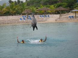 Photo of Puerto Plata Ocean World Dolphin Swim Acrobats