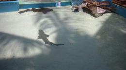 Photo of St Thomas Swimming with Sharks at Coral World Ocean Park Coral World Ocean Park
