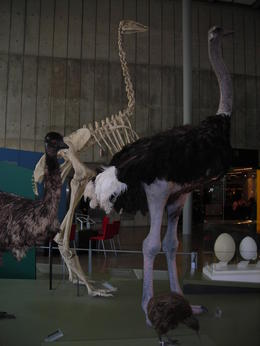It was neat getting a feel for how big ostriches really are., Melissa H - May 2013