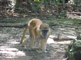 This was taken at the Nature Preserve, we could feed these monkeys, Selena H - October 2010