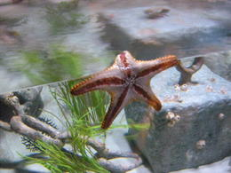 A starfish resting on the glass, JennyC - February 2011