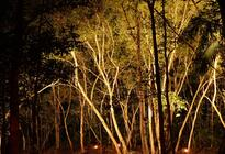 Photo of Cairns & the Tropical North Cairns Flames of the Forest Dining Experience