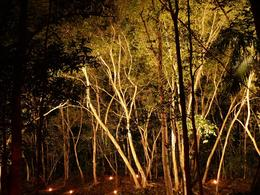 Photo of Cairns & the Tropical North Cairns Flames of the Forest Dining Experience The forest lit by candles