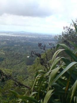 Photo of Auckland Coast and Rainforest Walk Eco-Tour from Auckland Auckland from Waiheke