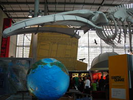 The earthquake area. The blue whale came over to enjoy the exhibits too., Melissa H - May 2013