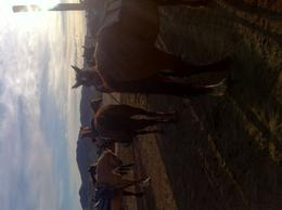 Photo of Las Vegas Wild West Sunset Horseback Ride with Dinner Neeigh!