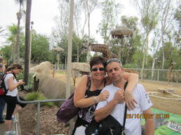 Photo of Los Angeles San Diego Zoo with Transport with the giraffes
