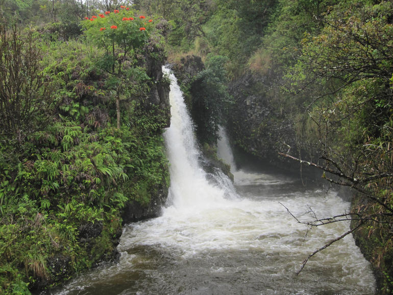 Water falls and African tulip trees