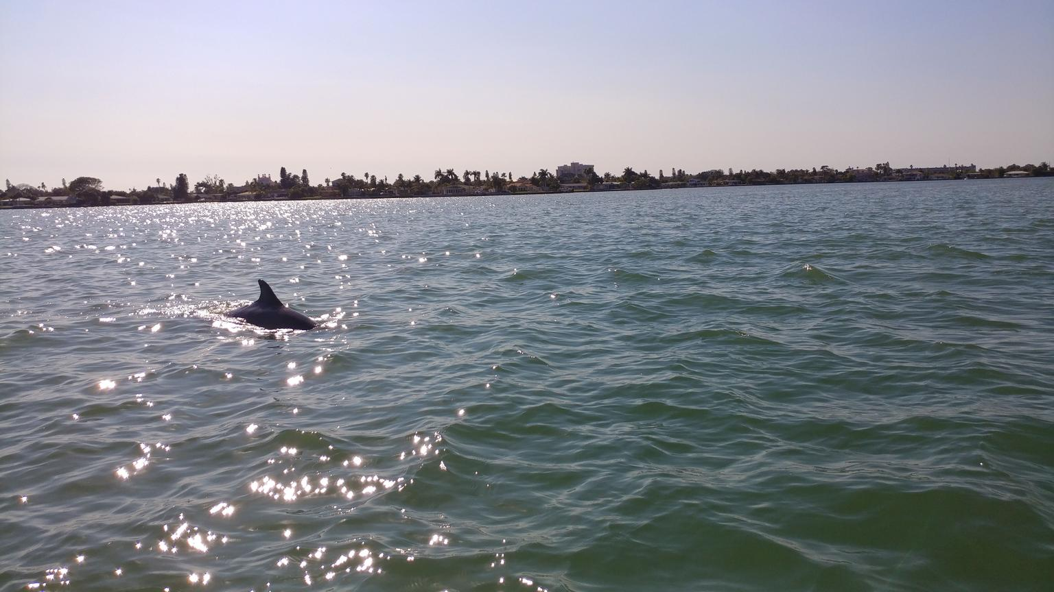Dolphin Watch Cruise with Snorkeling to Shell Key