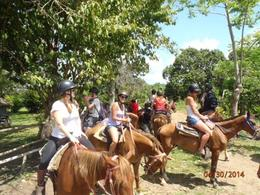 Photo of Punta Cana Punta Cana River Horseback Riding and Zipline Tour Horses
