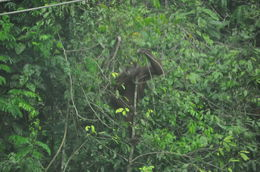 While on the trail this orang utan looked upon us , Jean-Guy R - May 2016