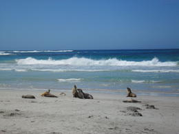 Photo of Adelaide Kangaroo Island in a Day Tour from Adelaide SAM_4619