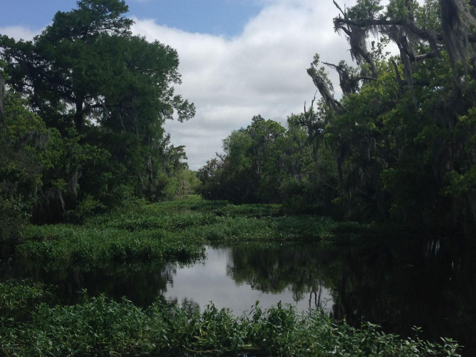 Small-Group Bayou Airboat Ride with Transport from New Orleans