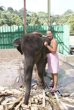 Photo of Kuala Lumpur Private Tour: Elephant Orphanage Sanctuary Day Tour from Kuala Lumpur Baby orphan