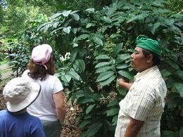 All our guides were fantastic. This guide took the time to show us coffee and various other forms of fruits and vegetables., Gail F - July 2009