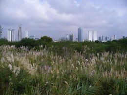 Biking through the ecological reserve, with great views of Buenos Aires! , kerry L - May 2011