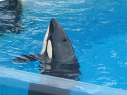 Photo of Anaheim & Buena Park SeaWorld San Diego with Transport shamu