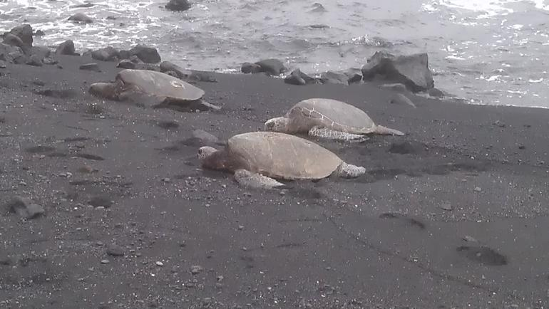 turtles up close - Oahu